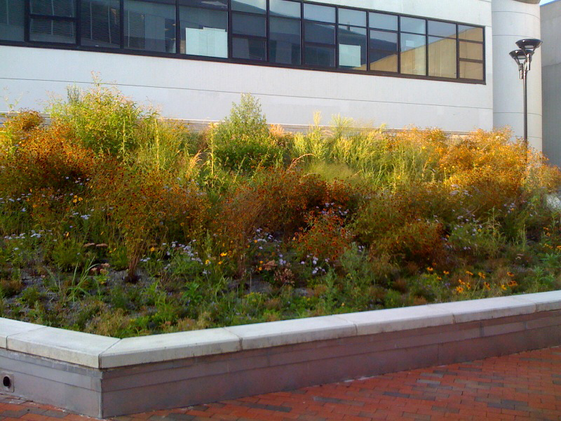 green roof july 2012